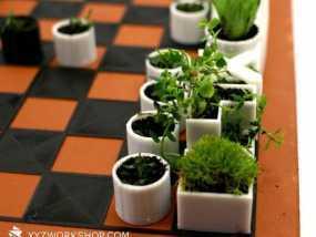 小型植物棋盘