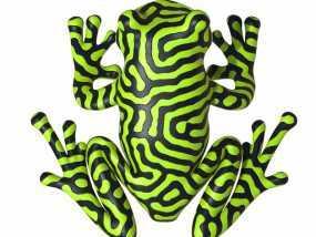 双色雨蛙 树蛙
