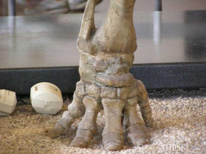 嵌齿象 足骨 3D打印模型渲染图