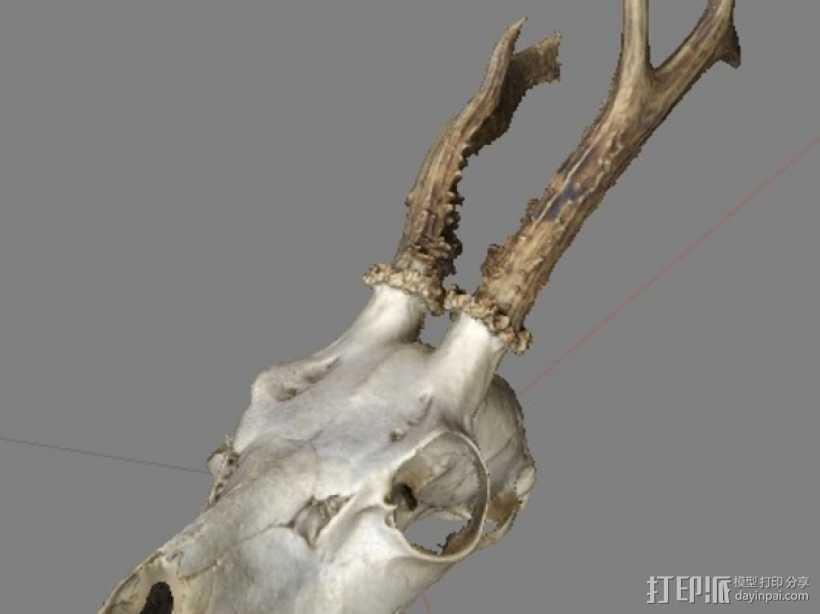 鹿头骨 3D打印模型渲染图