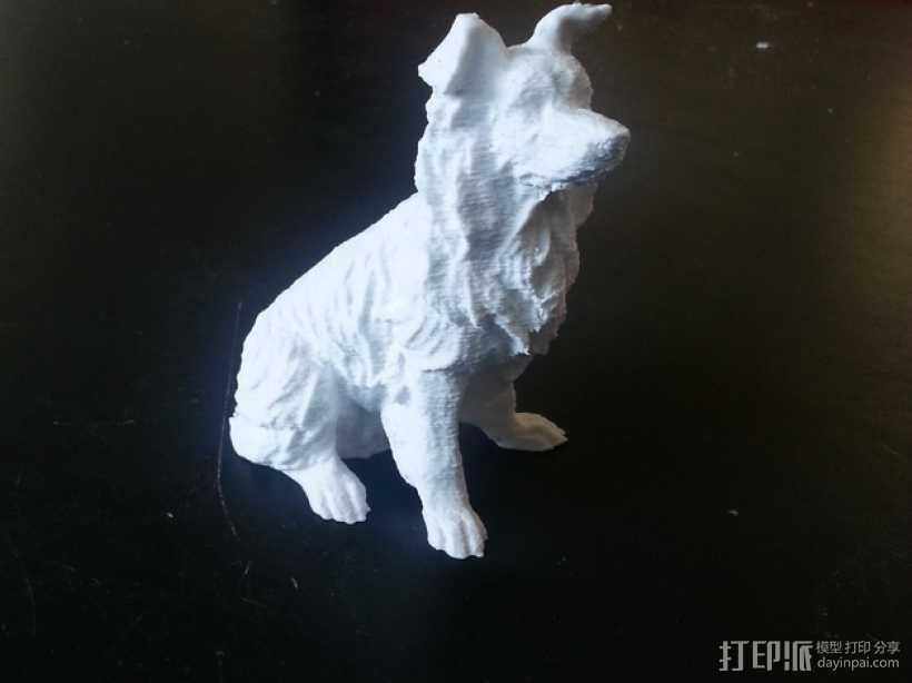 柯利牧羊犬 3D打印模型渲染图