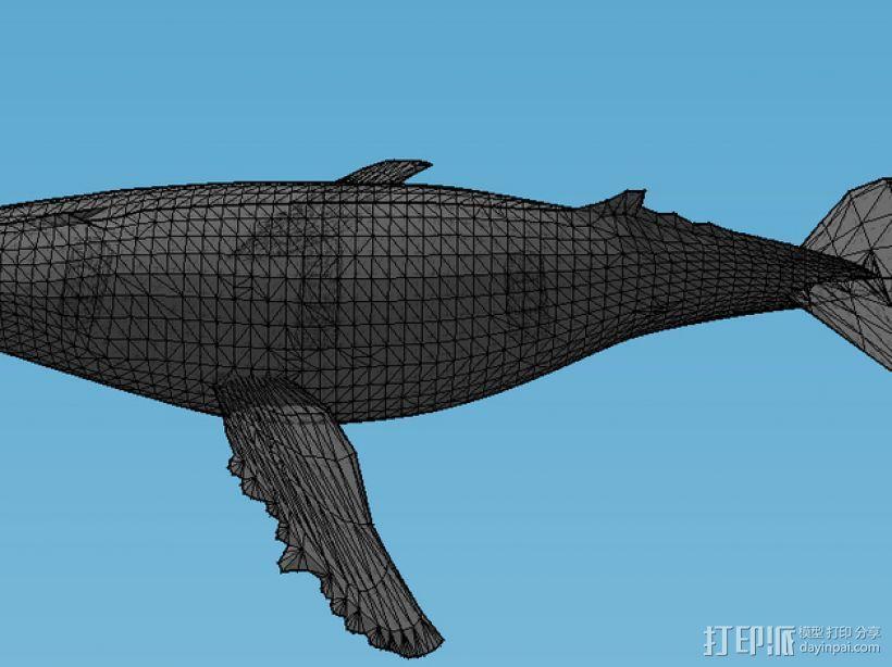 座头鲸 3D打印模型渲染图