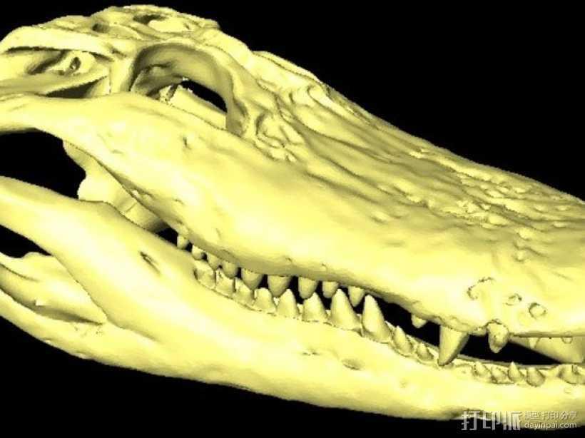 短吻鳄头骨  3D打印模型渲染图