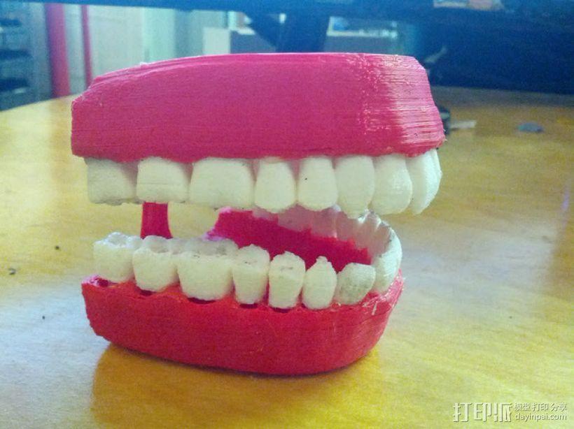 牙齿和牙龈 3D打印模型渲染图