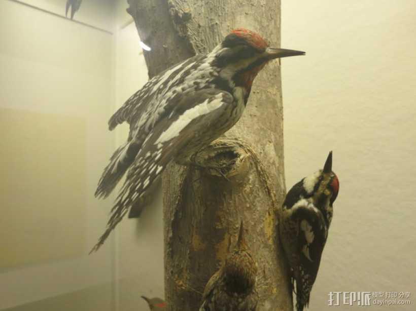 啄木鸟 3D打印模型渲染图