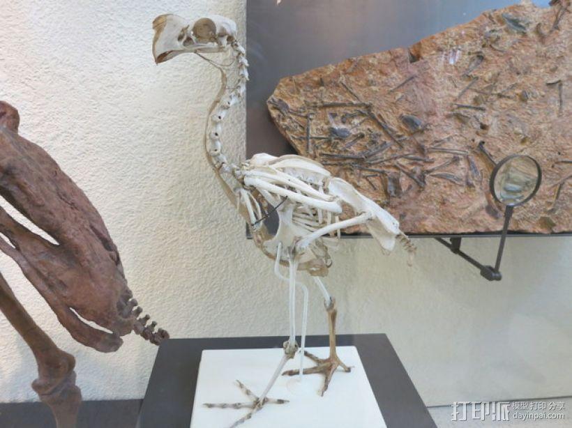 远古时期的鸟化石 3D打印模型渲染图