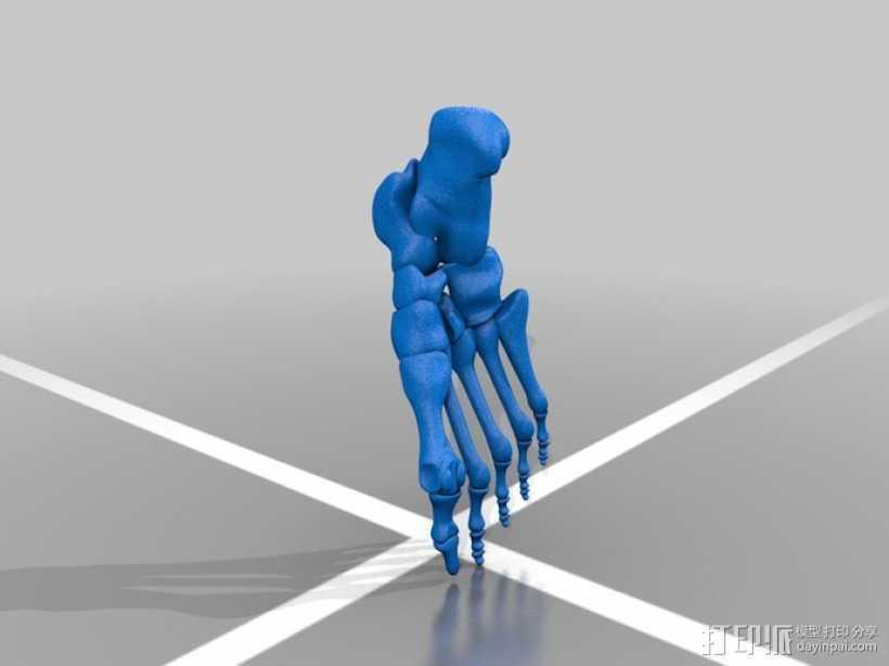 人体脚骨骨骼 3D打印模型渲染图