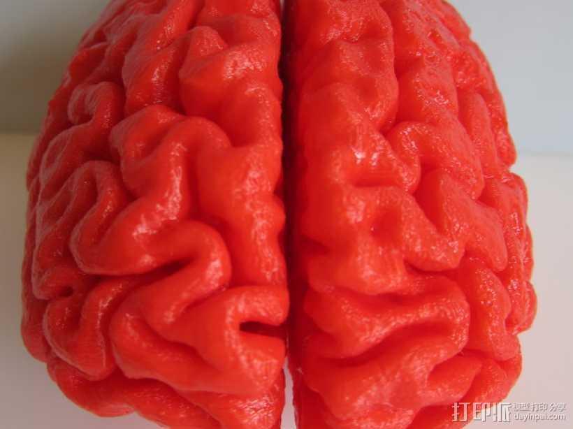人脑 3D打印模型渲染图