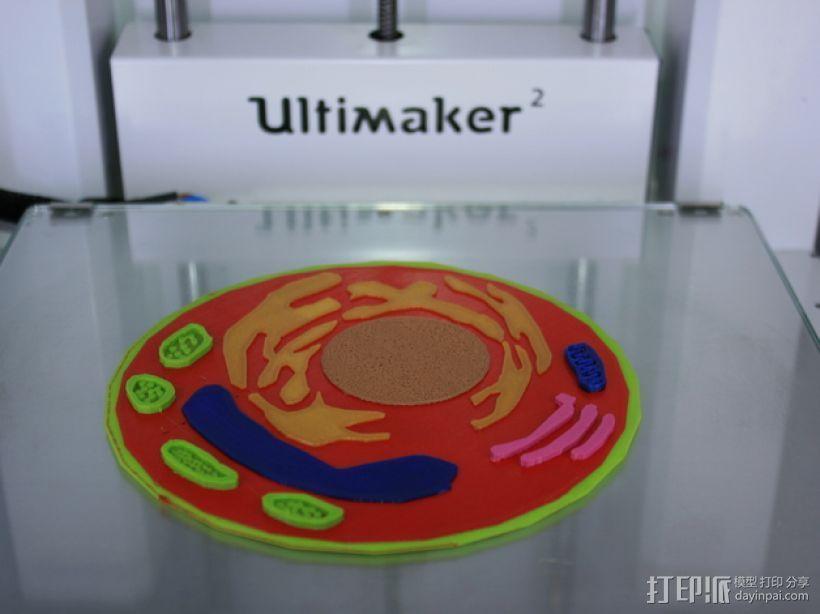 植物细胞 模型 3D打印模型渲染图