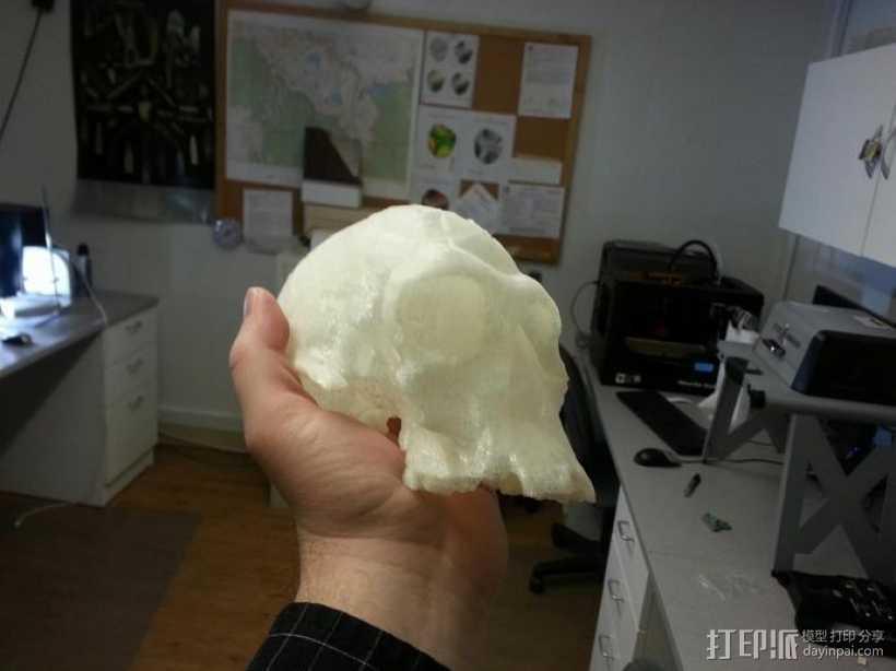 猿人头骨模型 3D打印模型渲染图