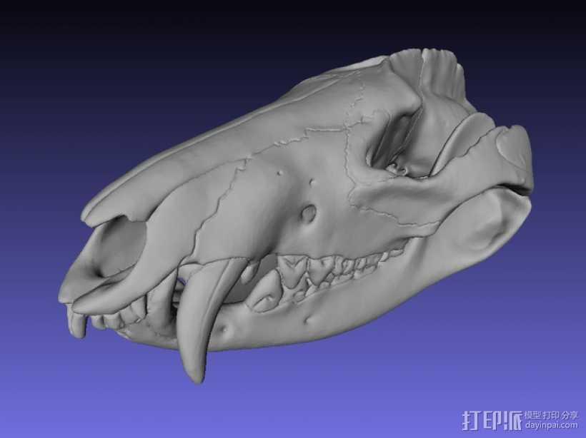 弗吉利亚负鼠头骨 3D打印模型渲染图