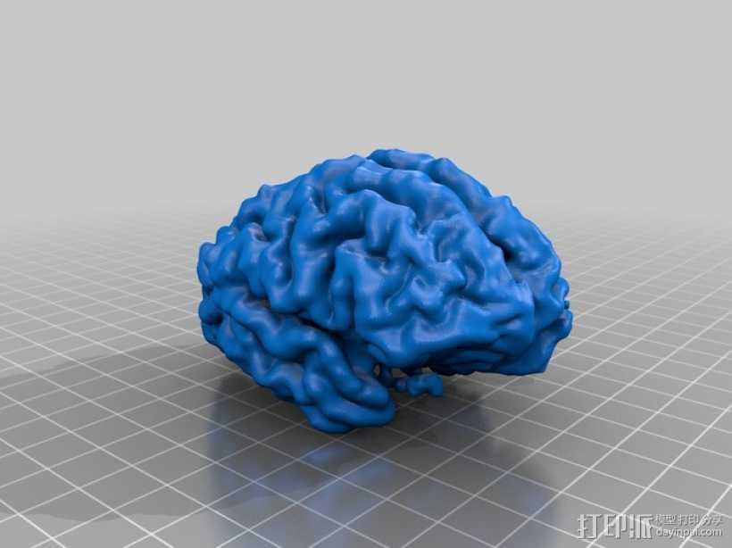 大脑皮层模型 3D打印模型渲染图