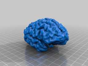大脑皮层模型