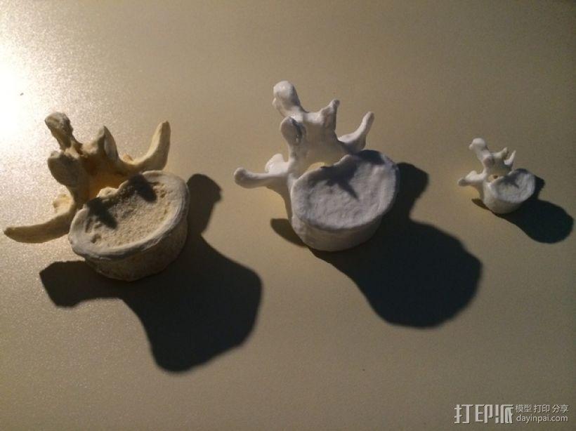 脊椎骨模型 3D打印模型渲染图