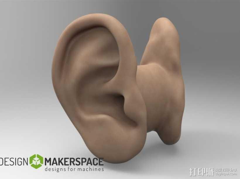 耳机收纳器 耳朵 3D打印模型渲染图