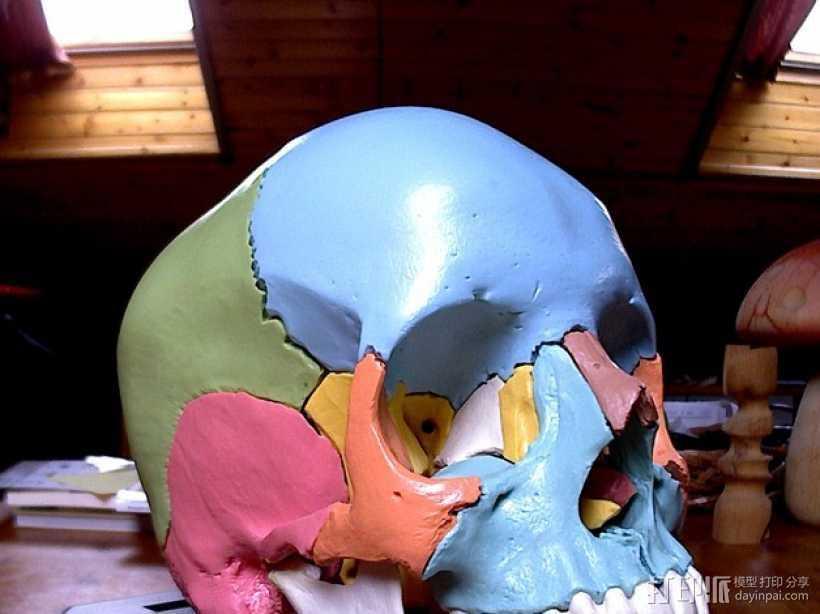 解剖形 头骨 3D打印模型渲染图