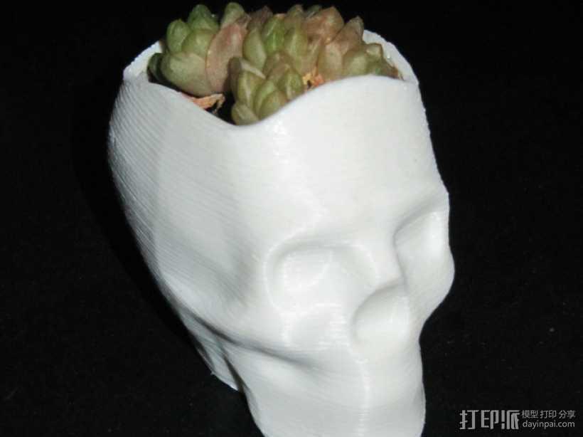 骷髅头花盆 3D打印模型渲染图