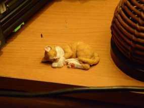 沉睡中的小猫