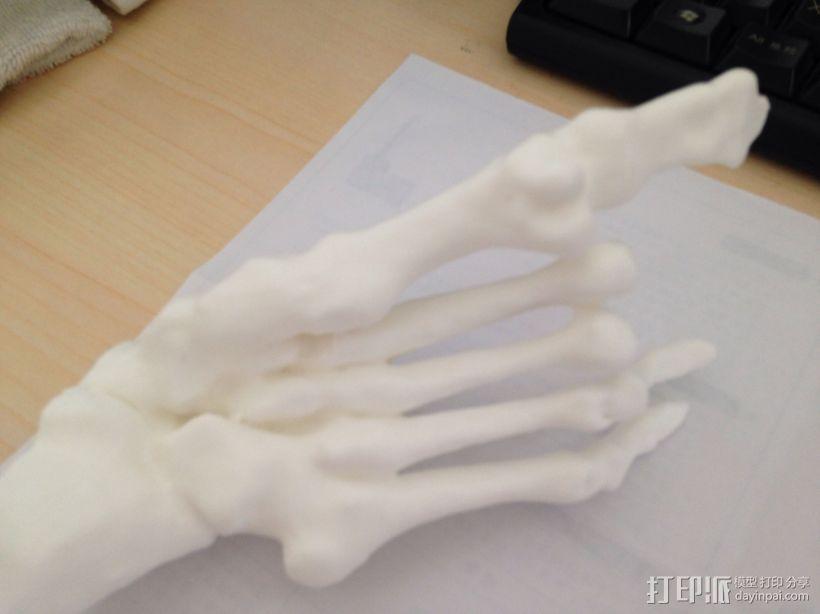 骨骼模型 3D打印模型渲染图