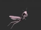 螳螂模型一只