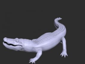 鳄鱼模型玩具