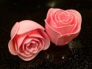绽放的玫瑰花