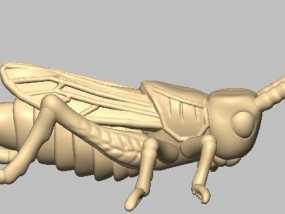 昆虫 蝗虫 标本
