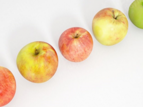 一个苹果模型