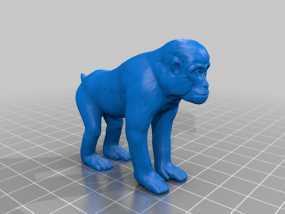 这是一只猴子,monkey