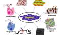 石墨烯在3D打印和生物医学应用中的奇迹和毒性