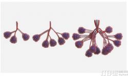 神经系统与莱斯大学合作3D打印出血管网络