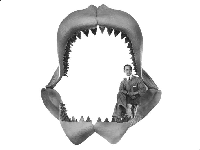 大鲨鱼牙齿