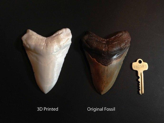 大鲨鱼牙齿 3D打印模型渲染图