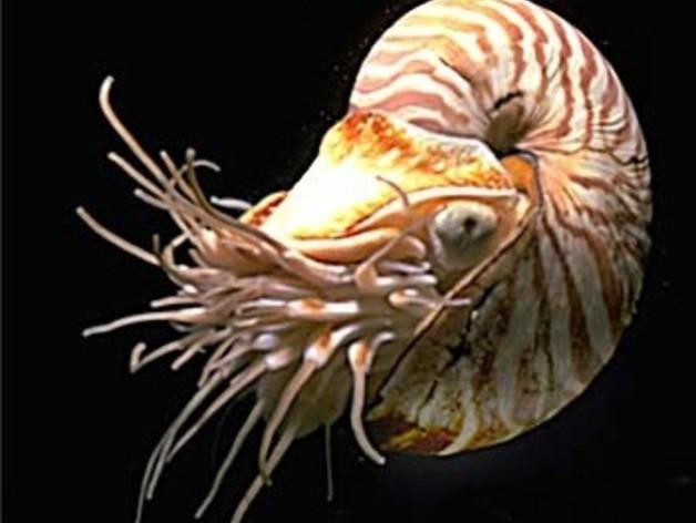 鹦鹉螺 3D打印模型渲染图