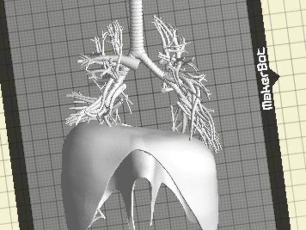 肺 3D打印模型渲染图
