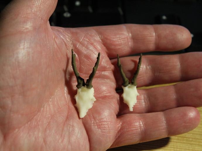袍子头骨模型 3D打印模型渲染图
