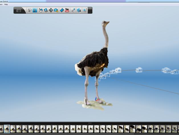 非洲鸵鸟 3D打印模型渲染图