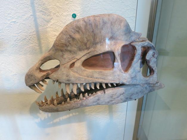 双脊龙头骨 3D打印模型渲染图