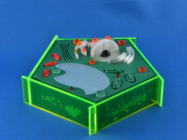 植物细胞 模型