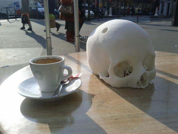 人头骨模型