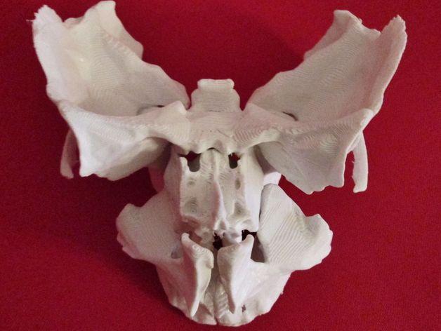 动物脸部骨架模型 3D打印模型渲染图
