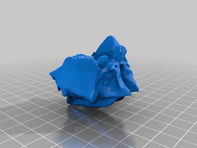 动物脸部骨架模型