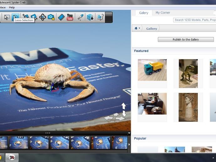 斑点蟹模型