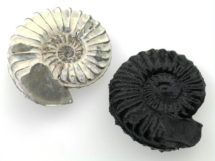 鹦鹉螺化石模型