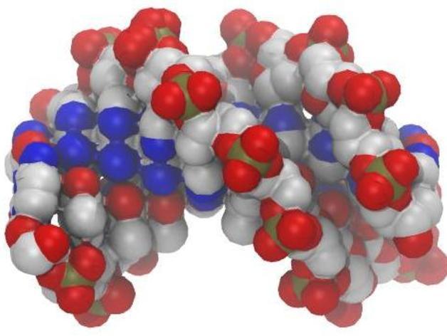 DNA分子模型