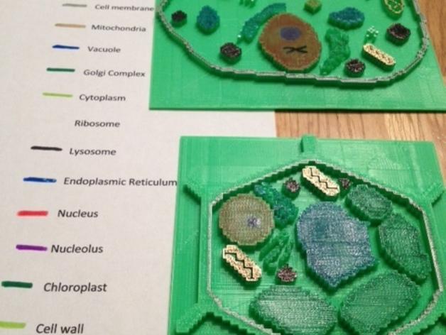 植物细胞模型和动物细胞模型