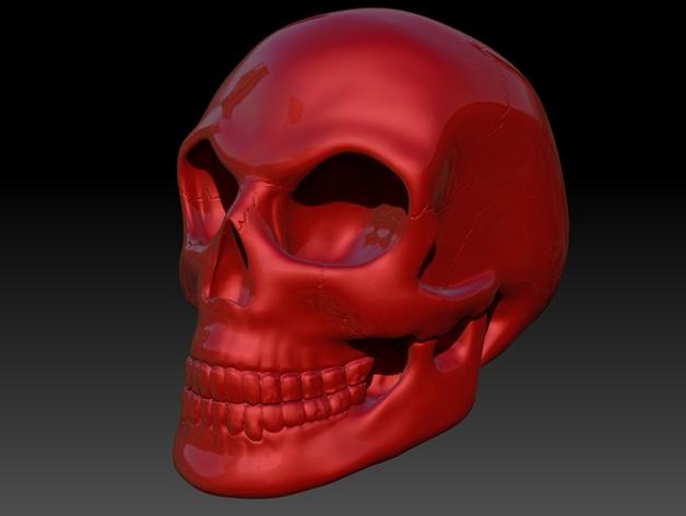 头骨 模型