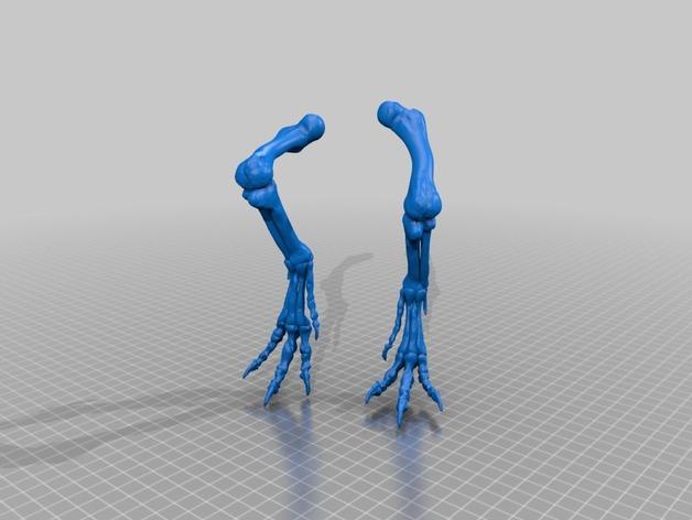 恐龙骨架 模型