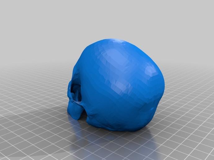头骨模型 骷髅头