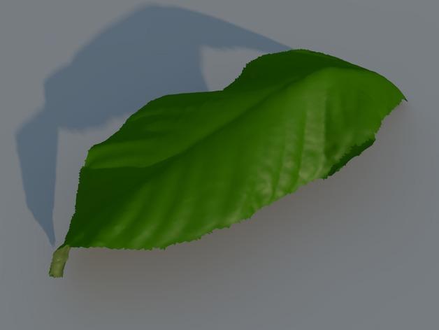 树叶 3D打印模型渲染图